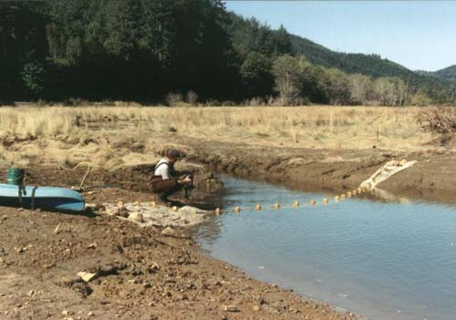 seining at Yaquina restoration site